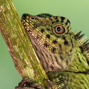 by Steve Bulford - Animals Reptiles ( steve bulford )
