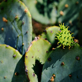 All Babies Are Cute by Don Bates - Nature Up Close Other plants ( succulants, green, summer, new mexico, cactus )