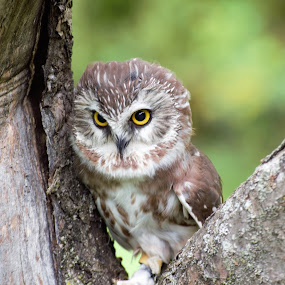 On Alert by Monroe Phillips - Animals Birds