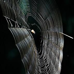 Cobweb by VAM Photography - Nature Up Close Webs ( cobweb, nature, spider, travel, arkansas,  )