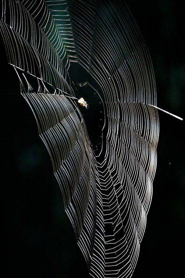 Cobweb by VAM Photography - Nature Up Close Webs ( cobweb, nature, spider, travel, arkansas )