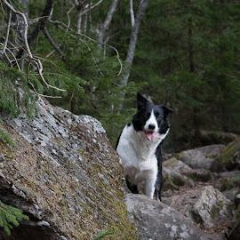 by Marko Paakkanen - Animals - Dogs Portraits (  )