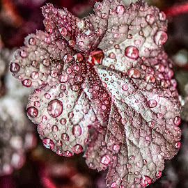 Rainy Leaf by Diane Ljungquist - Nature Up Close Leaves & Grasses