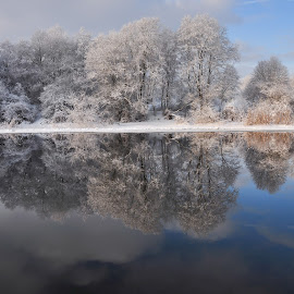 Reflection by Irena Gedgaudiene - Landscapes Waterscapes ( water, reflection, winter, snow, frost, trees )