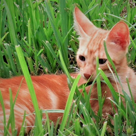 by Denise O'Hern - Animals - Cats Kittens