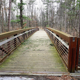 Mirror Lake Bridge by Kathy Kehl - Buildings & Architecture Bridges & Suspended Structures ( forests, forest, bridge, bridges, woods )