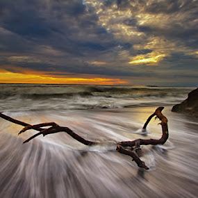 Leave Me aLog by Satrya Prabawa - Landscapes Waterscapes