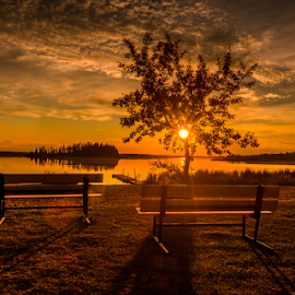 Elk Island City Park by Joseph Law - City,  Street & Park  City Parks ( bushes, trees, elk island, sunshine, edmonton, city park, evening, picnic table )