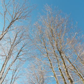 Iced Tree Tops by Tina Tippett - Landscapes Forests ( forests, trees, landscapes,  )