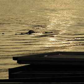 Golden Ripples by Tamsin Carlisle - Abstract Patterns ( water, reflection, pattern, sunset, waves, ripples, sea, dusk, sun,  )