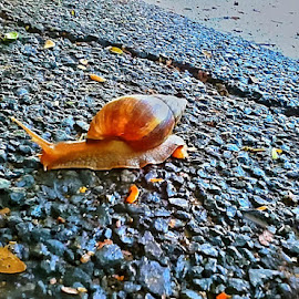 Snaily by Ruby Prem - Instagram & Mobile Android