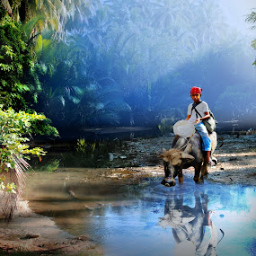 Boy on Carabao on River by Jun Santos - Landscapes Forests ( animals, nature, waterscape, trees, people )