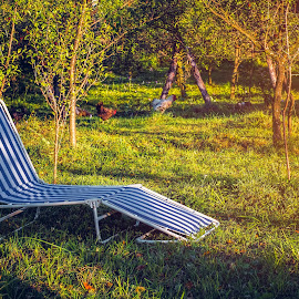 Lounge chair in garden by Opreanu Roberto Sorin - Artistic Objects Furniture ( lawn, poultry, relax, rooster, furniture, long, feather, free, tree, nature, autumn, empty, hen, deckchair, fruit, grass, agriculture, leisure, stripe, rural, vacation, apple, food, branch, trees, day, rest, natural, tan, range, holidays, space, landscape, spring, farm, chicken, fresh, sunny, meat, lounge, striped, fabric, animal, park, green, orchard, traditional, relaxation, farming, livestock, field, bird, urban, chair, two, organic, red, outdoor, fall, beak, ripe, meadow, healthy, summer, harvest, garden )