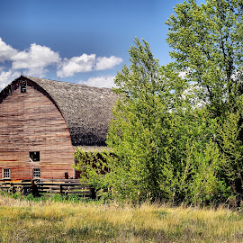 Barn by Dave Bower - Buildings & Architecture Other Exteriors