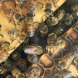 Bees knees by Majella Burrows - Instagram & Mobile iPhone ( hive, bees, insects, beekeeping, honey )