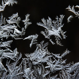 Frosty Glass II by Jeff Galbraith - Abstract Patterns ( winter, cold, freeze, frost, glass, frozen, frosty )