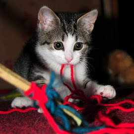 Pile of yarn by Katelin Welles - Animals - Cats Kittens