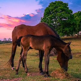 Evening Feed by Sarah Sullivan - Novices Only Pets