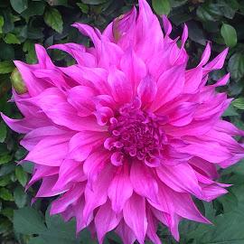 by Sanjjeev R Jain - Nature Up Close Gardens & Produce