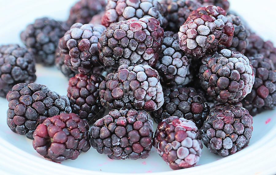 Blackberries by Sandy Considine - Food & Drink Fruits & Vegetables (  )