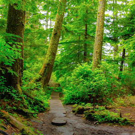 Path through the Olympic Rain Forest  by Gerry Slabaugh - Nature Up Close Trees & Bushes ( fern, tree, green, trail, path, moss, rain forest, nature up close, trees, woods, olympic rain forest,  )