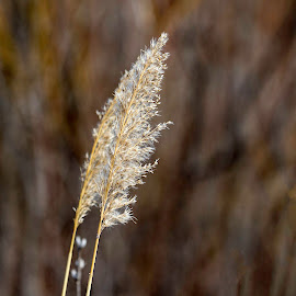 Tall Grass by Bruce Arnold - Nature Up Close Leaves & Grasses