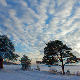 winterwonderland by Cecilie Hansteensen - Landscapes Cloud Formations ( fredrikstad, winter, nature, ice, snow, cloads, trees, winterwonderland, landscape, sun, norway,  )
