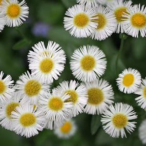 by Darrell Tenpenny - Flowers Flowers in the Wild