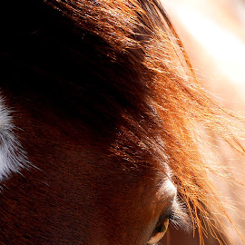 Beauty is in the Eye of the beholder by Patty Mo - Animals Horses ( close up of horse, horses, patricia maureen photography, eye of the horse, horse, patricia maureen, horse beauty, horse mane, pmp, patricia maureen photos, horse eye, patty mo )