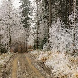 Winter in forest III by Dagmar Germaničová - Uncategorized All Uncategorized ( winter, ice, snow, forest )