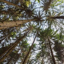 by Thomas Berwein - Nature Up Close Trees & Bushes