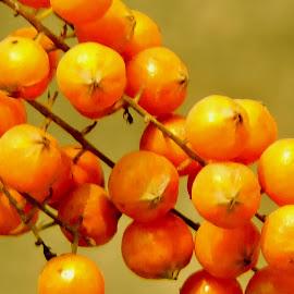 Wild Balls  by SANGEETA MENA  - Nature Up Close Gardens & Produce