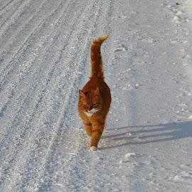 Charly by Gunn Lillian Kottelin - Animals - Cats Portraits