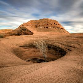 Desert Fortitude  by Brock Slinger - Landscapes Deserts ( desert, tree, utah, slickrock, sandstone )