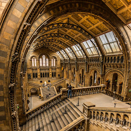 Natural History Museum by Nikolas Ananggadipa - Buildings & Architecture Public & Historical ( canon, interior, building, london, wide angle, buildings, architecture, museum )