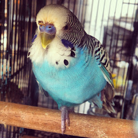by Mohd Fauzan - Animals Birds