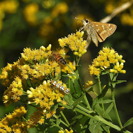 Little critters on goldenrod by Mary Gallo - Nature Up Close Other Natural Objects ( butterflies, fall colors, yellow goldenrod, nature up close, insects )