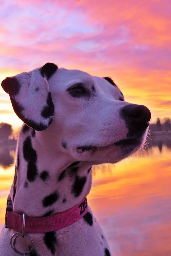 Sunrise chill by Karen Noble - Animals - Dogs Portraits (  )