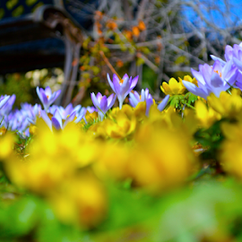 A Spring Garden by Rob Kovacs - Novices Only Flowers & Plants