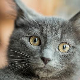 by Arslan Uçar - Animals - Cats Portraits