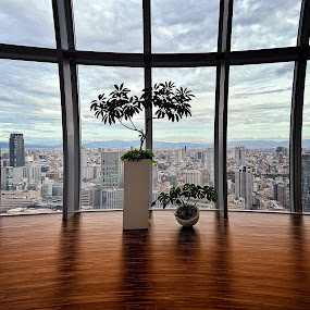 The highest trees in this city by Hiro Ytwo - City,  Street & Park  Vistas ( city trees indoor buildings )