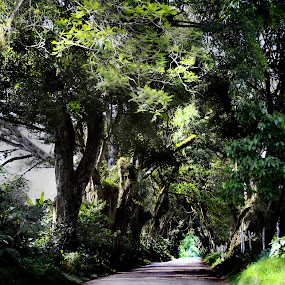 Road into the trees by Cristobal Garciaferro Rubio - Nature Up Close Trees & Bushes ( trees, leaf, road, leaves, branches )