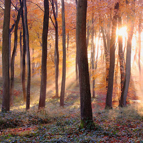 Autumn Morning by Ceri Jones - Landscapes Forests ( wood forest autumn )