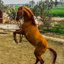 my horse by Mohsin Raza - Instagram & Mobile Other