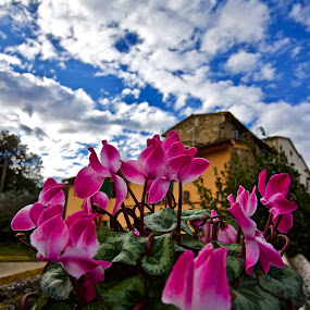 Paradise spring by Fabrizio Reali - Flowers Flower Gardens ( spring, cloud, sky, color, nature, paradise, clouds, colors, flower )