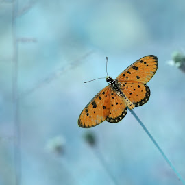 Butterfly by Djoko Widodo - Animals Insects & Spiders ( butterfly, macro, nature, macro photography, insect )