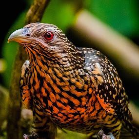 Got To Go by Ken Nicol - Animals Birds (  )