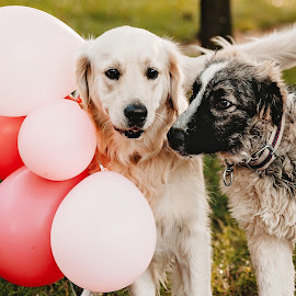 party by Krisztina Ajtai - Animals - Dogs Playing ( dog, friends,  )