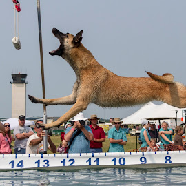 Jump Contest by Patrick Barron - Animals - Dogs Playing ( michigan, jumping, dog contest, battle creek, airshow )