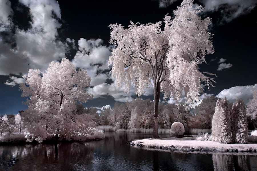 Infrared Scenery - Montreal Botanical Gardens by Rachel Bilodeau - Landscapes Waterscapes
